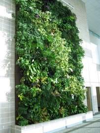GBCC living wall